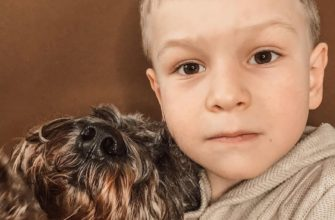 Ребенок и собака: дружба и взаимопонимание