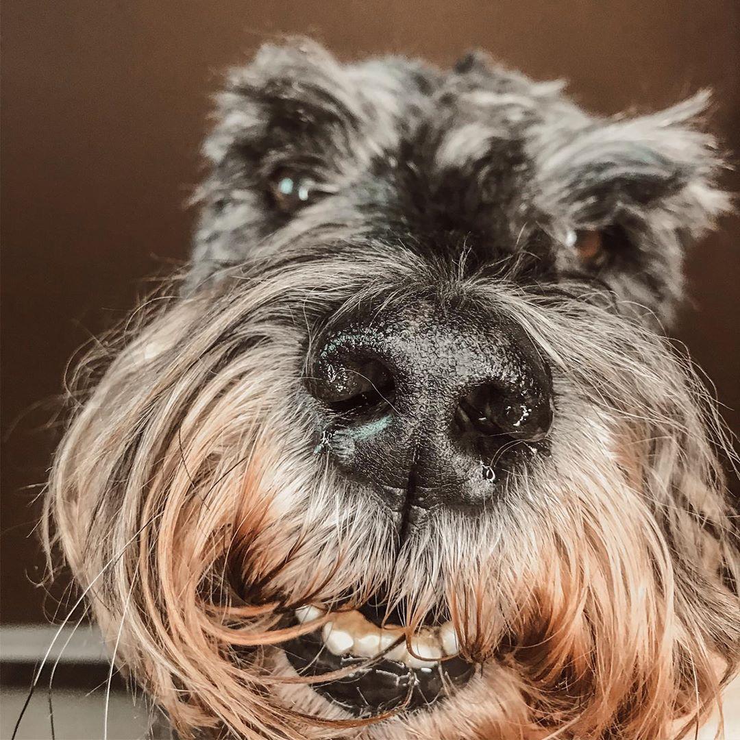 Собака - верный друг и товарищ человека