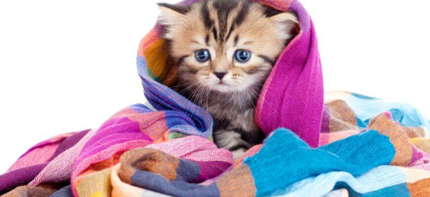 Из каких материалов изготавливают популярные дряпки для котов